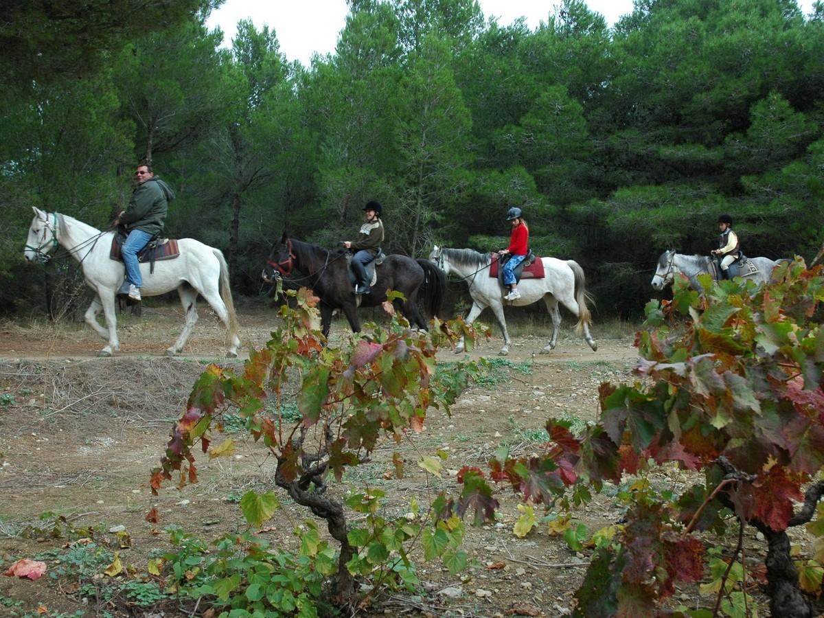 Centre De Tourisme Equestre Les Ayguades