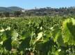 Balade au milieu des vignes