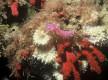 Explorez la biodiversité sous marine