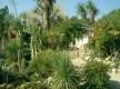 Jardin exotique de Sanary sur mer