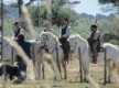Manade Tournebelle - Balades à cheval, journées Camargue