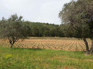 Le Sentier des Vignes