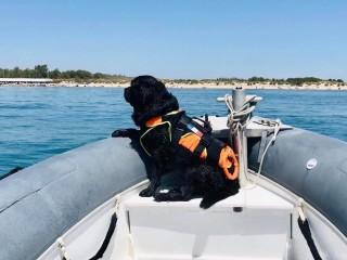 Marcus chien de sauvetage en mer