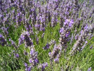 Open Gardens / Jardin Ouvert