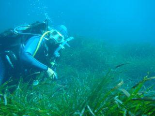 Cap Corse Immersion, Club de Plongée, à Macinaggio