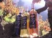 bouteilles 3 couleurs