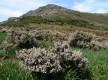 Monte Alticcione