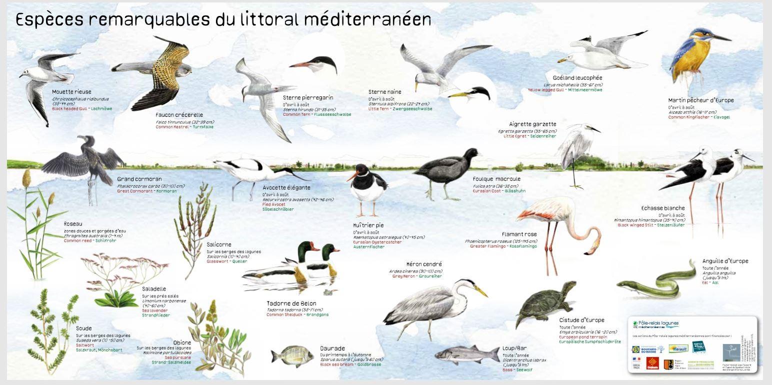 Observer les oiseaux sur la lagune