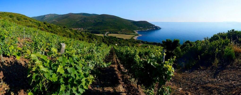Domaine Pieretti© - Luri - Cap Corse