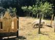 Camping à la ferme U LICETU - Pietracorbara