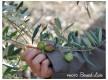 Le jardin des oliviers Sanary sur mer
