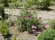 Le jardin de l'Ermite
