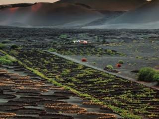Vinos de Lanzarote