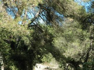 Une forêt ressource