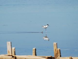 Le paradis des oiseaux