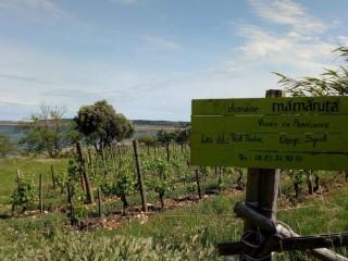 Des Higlands dans le vignoble