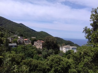 Pino - Cap Corse Capicorsu