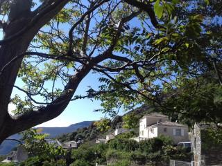 Olcani - Cap Corse Capicorsu