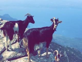 U casgiu di San Guglielmu - Patrick Gassmann - Cap Corse Capicorsu