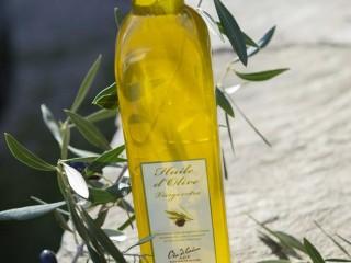 Oliu di Corsica - Olivier Bardin - Poggio - Cap Corse Capicorsu