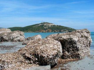 Baie de Macinaggio,