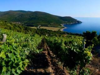 Domaine Pieretti - Cap Corse Capicorsu