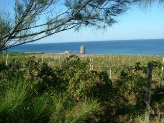 AOC - AOP - Vins de Corse - Coteaux du Cap Corse