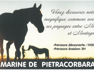 U Cavallu di Petracurbara - Cap Corse Capicorsu
