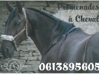 U Cavallu di Brandu - Erbalunga - Cap Corse Capicorsu