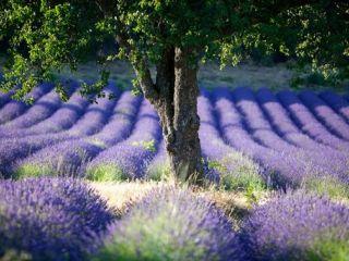 Informations Provence-Alpes-Côte d'Azur