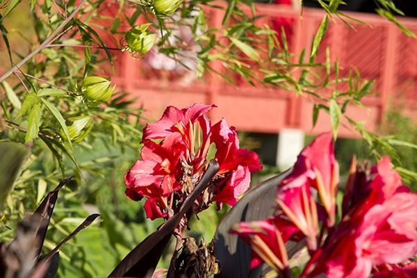 Nature-Espaces-verts-Fleurs-2